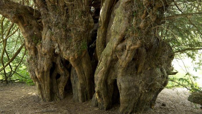 Дерево, хранящее историю